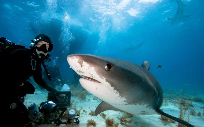 Be as Fearless as This Shark Diving Expert