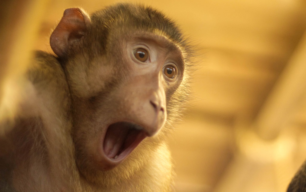 Watch This Monkey Realize Magic Is Real