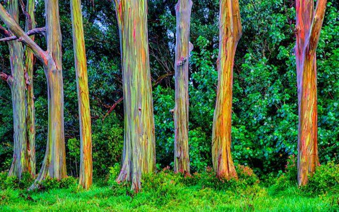 These Strange Trees Look Alien