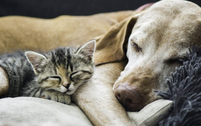 How-to-Help-Animals-During-COVID-19-and-Why-You-Should