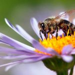 Why It's Important to 'Bee' Kind to Nature
