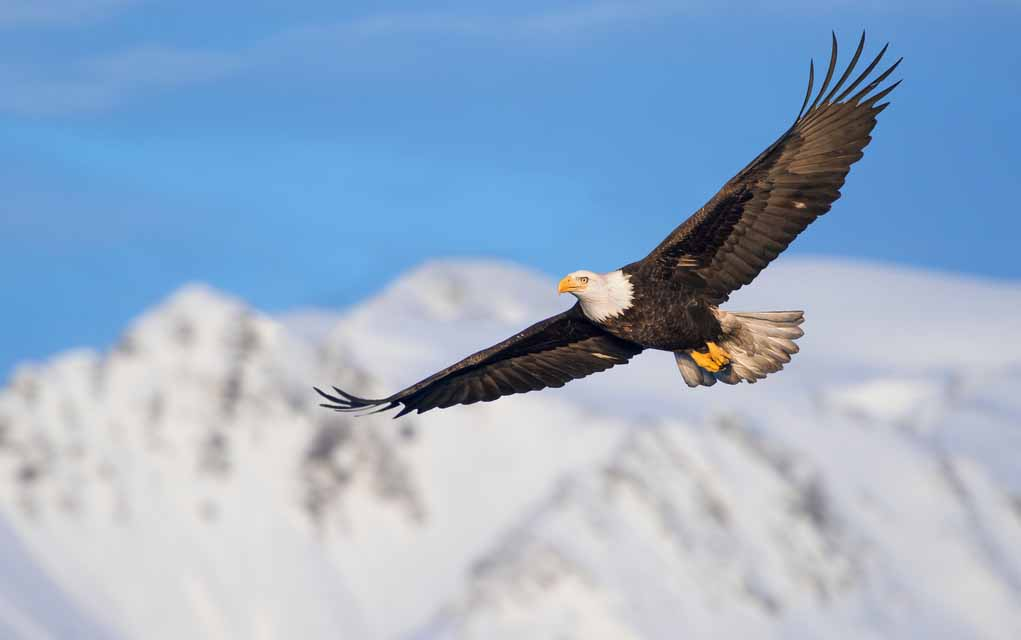 5 Tips to Soar Like an Eagle