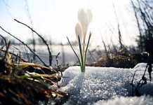 Spring — Fresh Start for All