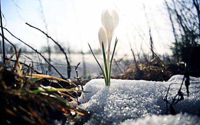 Spring — Fresh Start for All